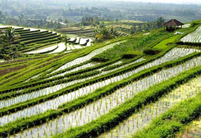 Rice terraces near Jatiluwih, Bali, Indonesia.